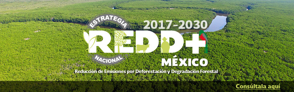 Consulta la Estrategia Nacional REDD+ 2017-2030