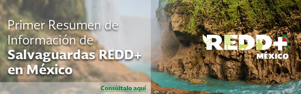 resumen_de_informacion_final